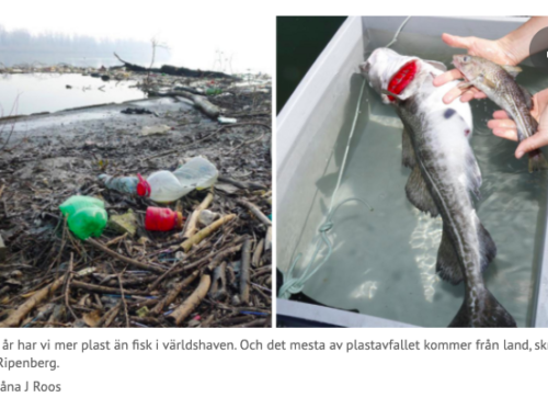 Svenskar låter andra länder dumpa sina plastsopor i haven